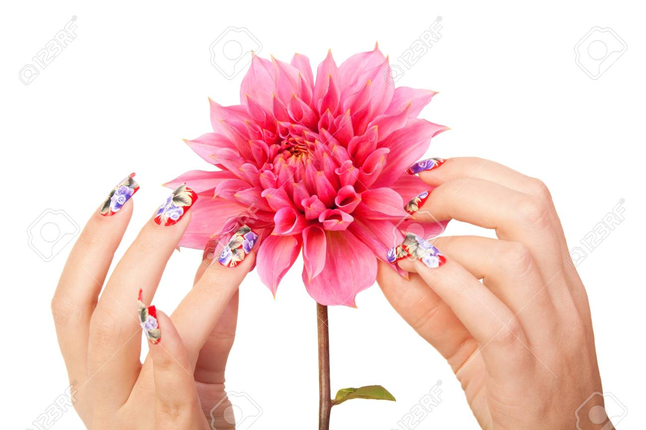 Two female hands with beautiful fingernails over a pink flower, on a white background Stock Photo - 11154309