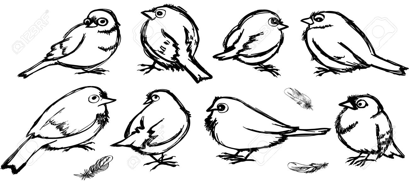 Set Of Contours Of Birds Cartoon Sparrows With Big Eyes In Black Royalty Free Cliparts Vectors And Stock Illustration Image 96162344