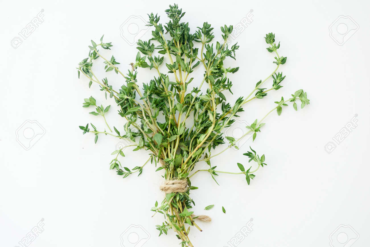Bouquet of fresh thyme twigs on white background - 142411317