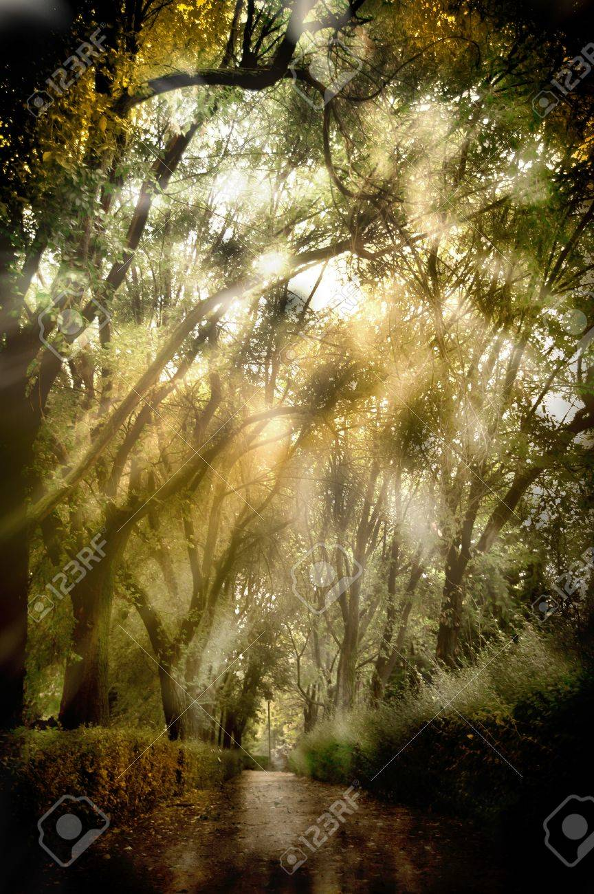 background forest with light and shadows Stock Photo - 11569411
