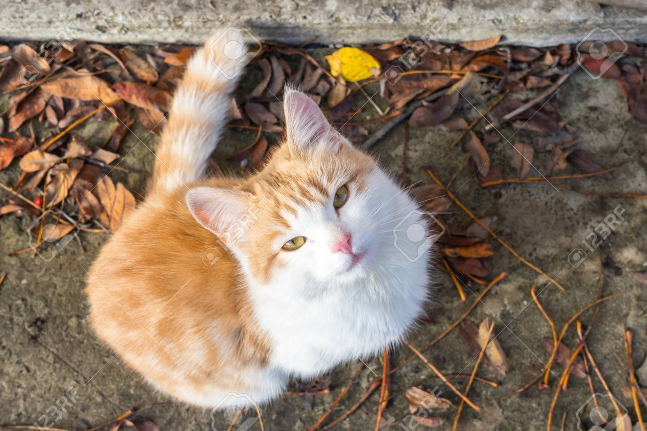 Homeless white-red kitten sitting on the ground and begging to the house - 108690774