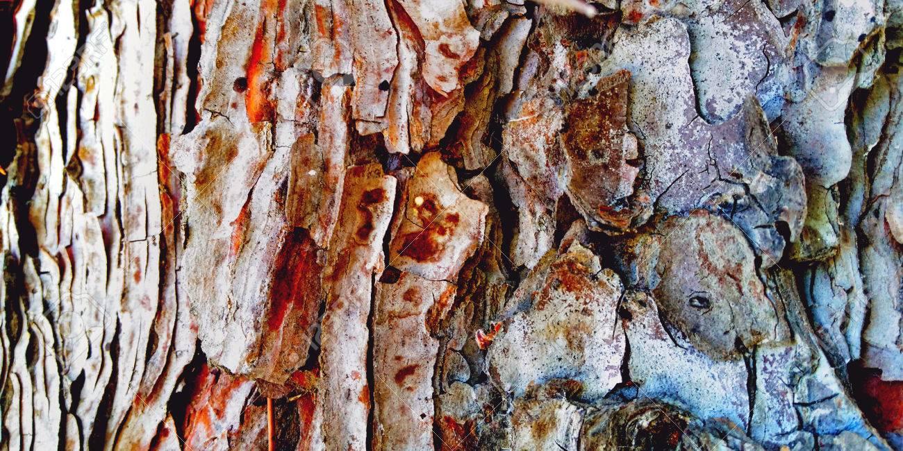 pine tree bark zoom - 62147257