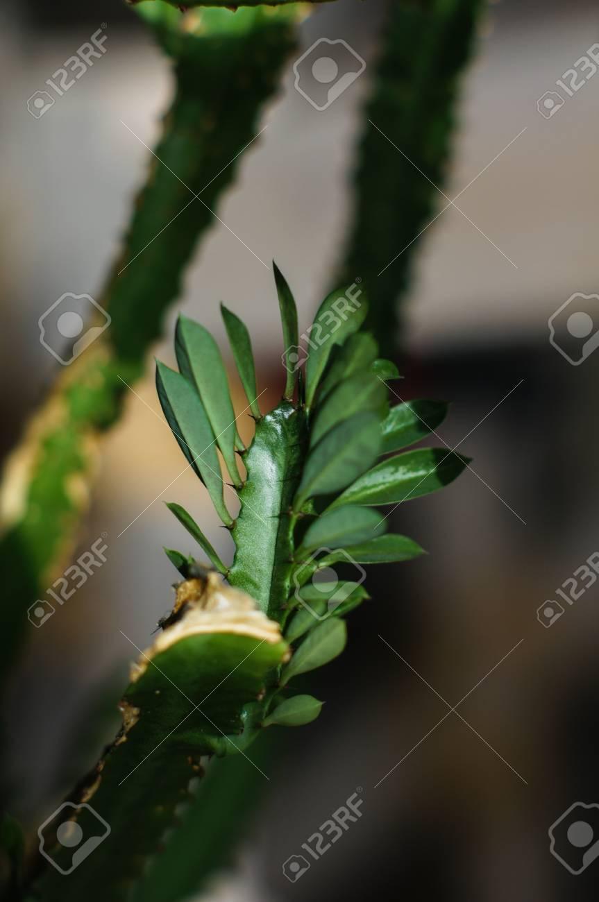 Groupes De Cactus Vert Herbe Jardin Interieur Banque D Images Et