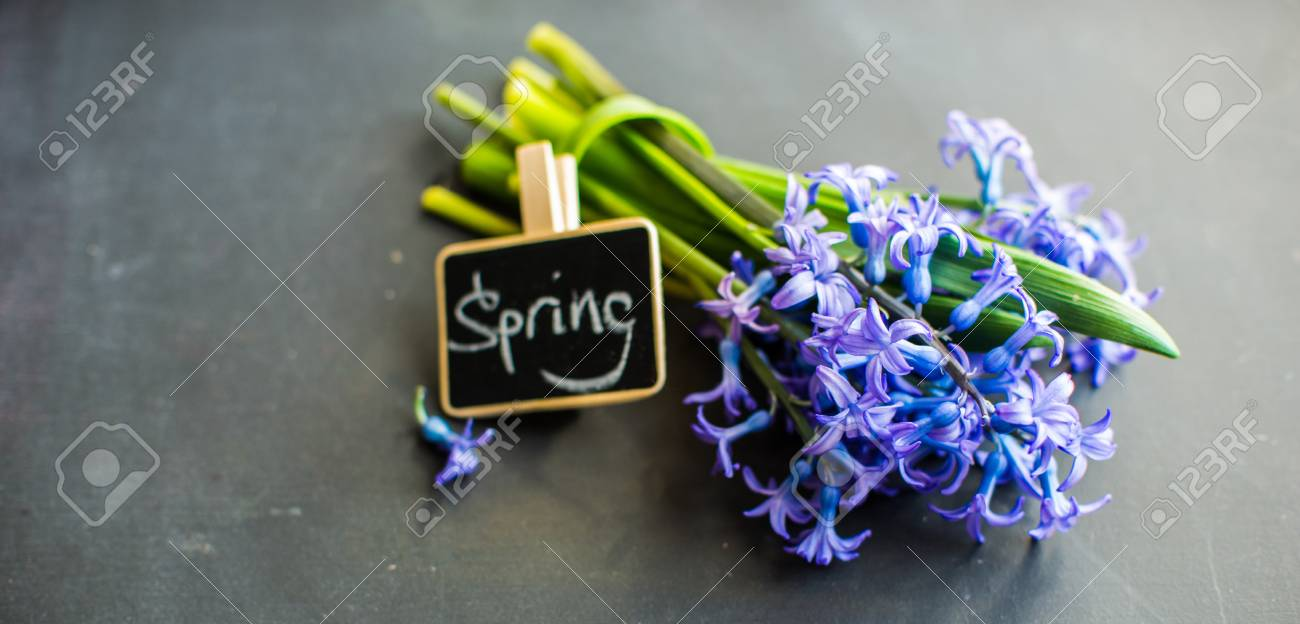Bouquet Of Bright Blue Hyacinth Flowers On Chalkboard As A Spring ...