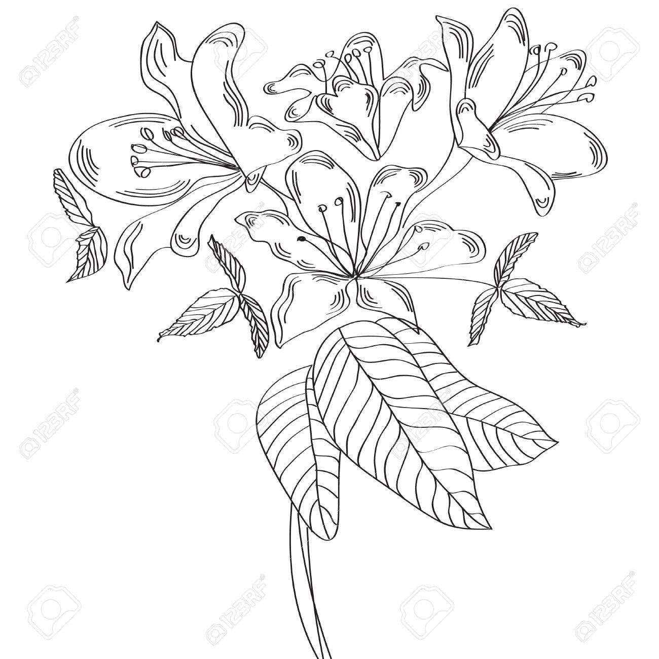 Sketch with lily Stock Vector - 5999049