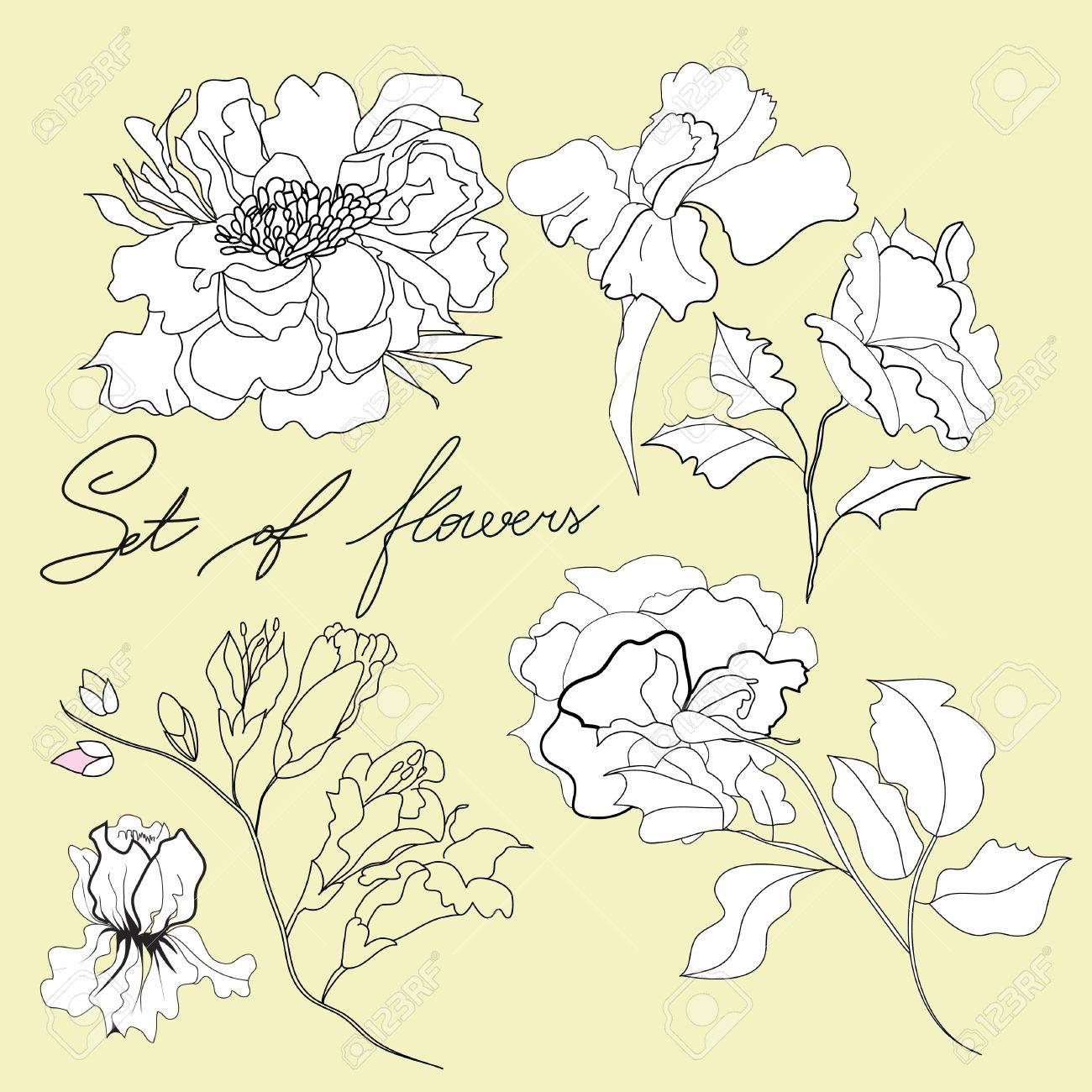 Set of flowers Stock Vector - 7420361