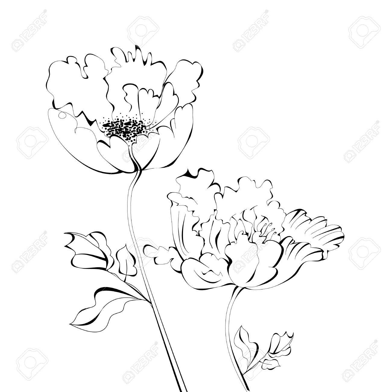 Black and white sketch with flowers Stock Vector - 9398126