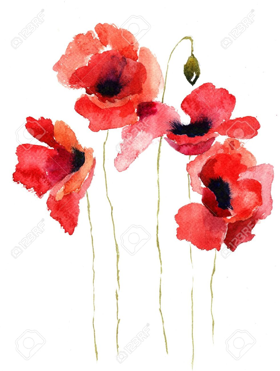 Stylized Poppy Flowers Illustration Stock Photo Picture And Royalty
