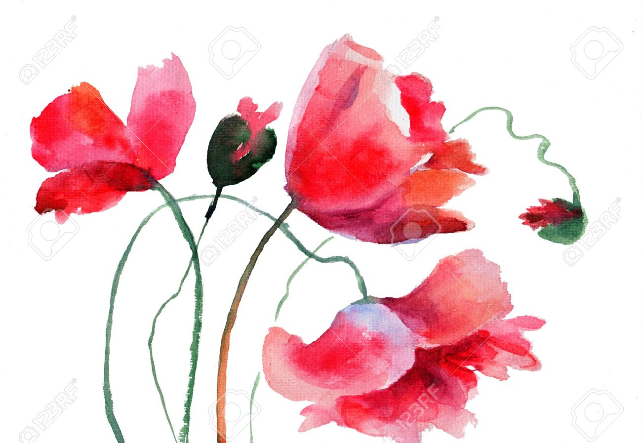 Stylized Poppy Flowers Watercolor Illustration Stock Photo Picture