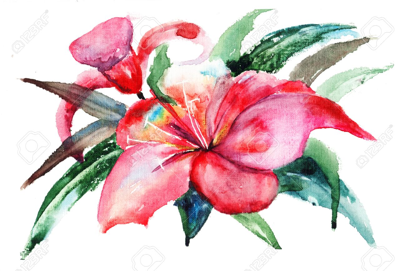 Lily Flowers Watercolor Illustration Stock Photo Picture And