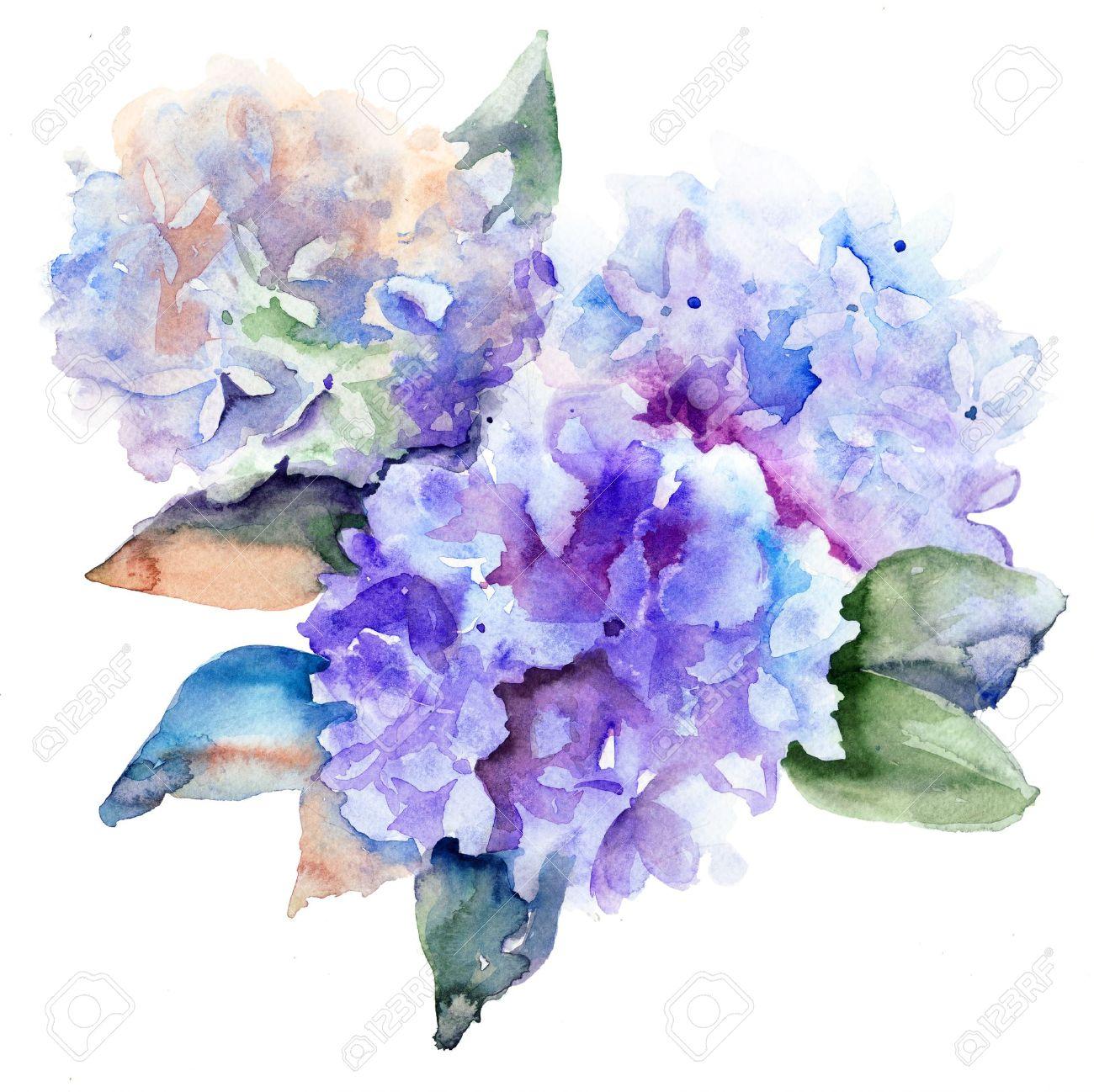 美しい青紫陽花水彩イラスト の写真素材画像素材 Image 17008966