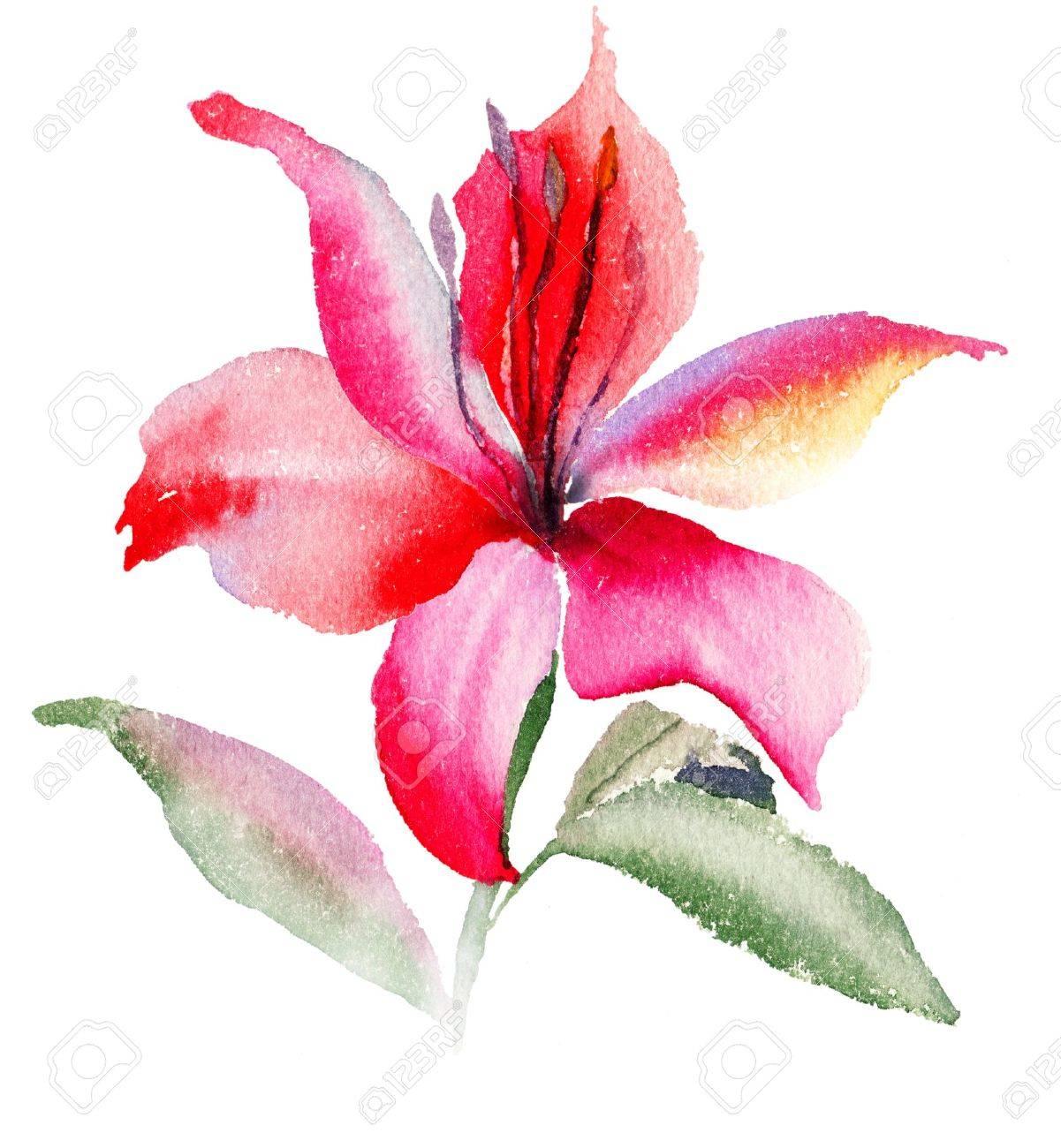 Belles fleurs de lys, illustration aquarelle Banque d\u0027images , 17008931