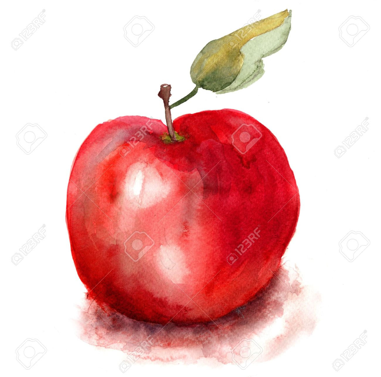 Stylized Watercolor Apple Illustration Stock Photo Picture And