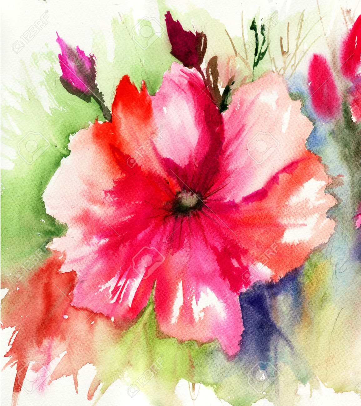 Beautiful Pink Flower Watercolor Painting Stock Photo Picture And