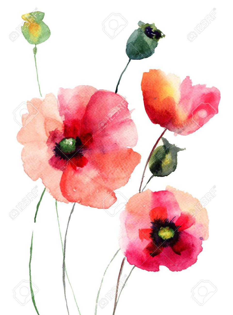 25978 poppy cliparts stock vector and royalty free poppy illustrations poppy flowers watercolor illustration mightylinksfo
