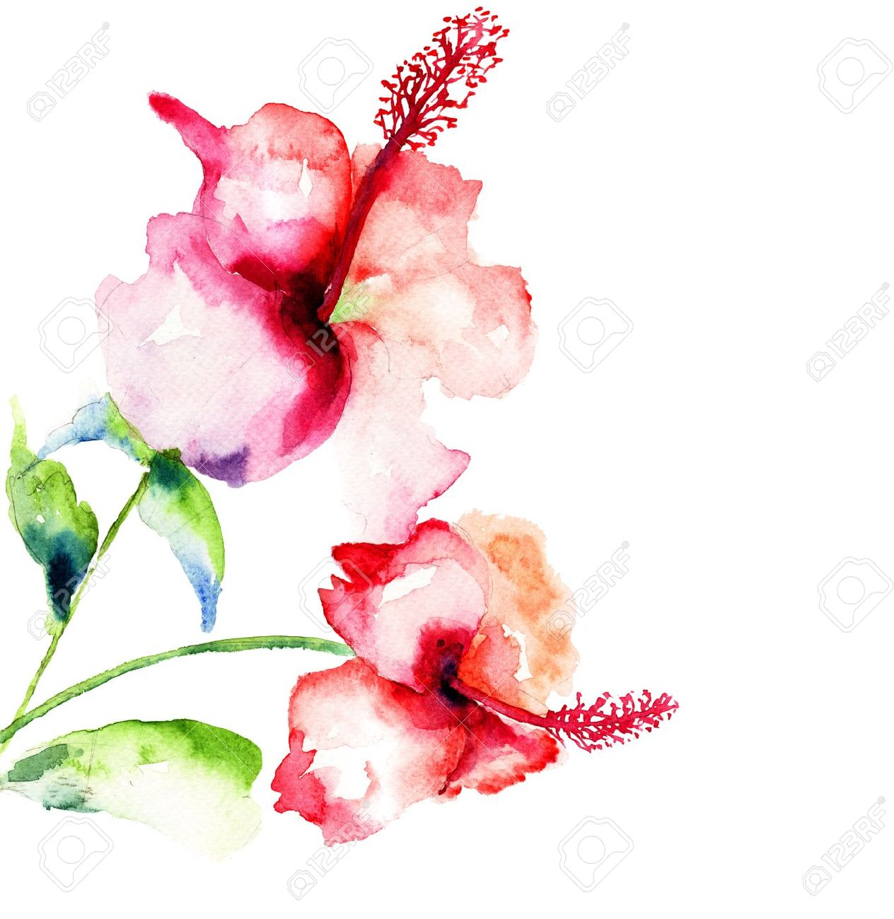 Red hibiscus flowerswatercolor painting stock photo picture and red hibiscus flowerswatercolor painting stock photo 21185779 izmirmasajfo