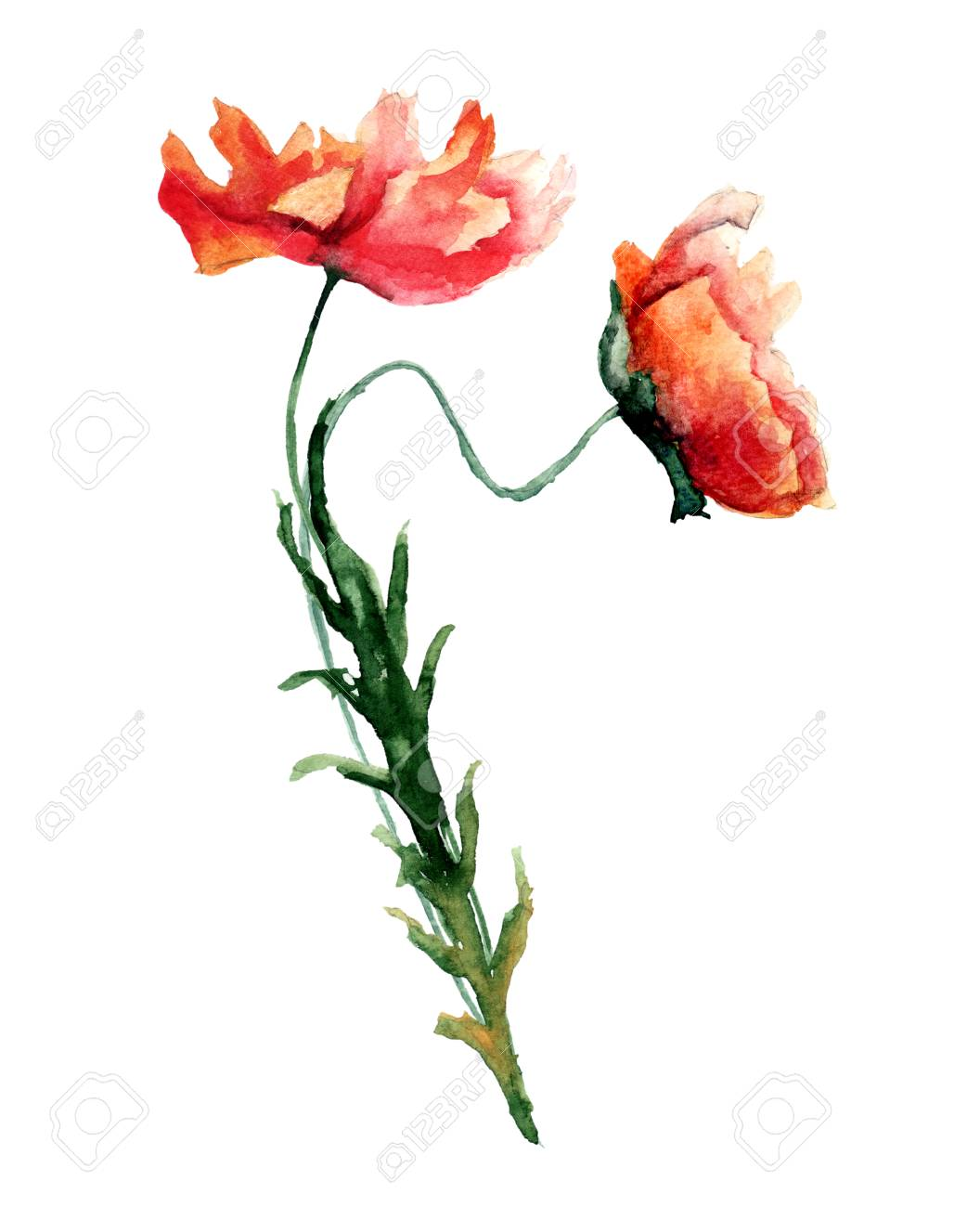 template for card with with poppies flowers watercolour