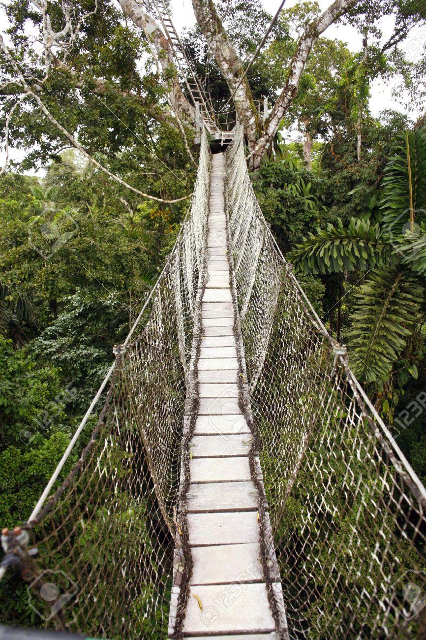 Canopy walkway strung between two rainforest trees in the Ecuadorian Amazon Stock Photo - 10679111