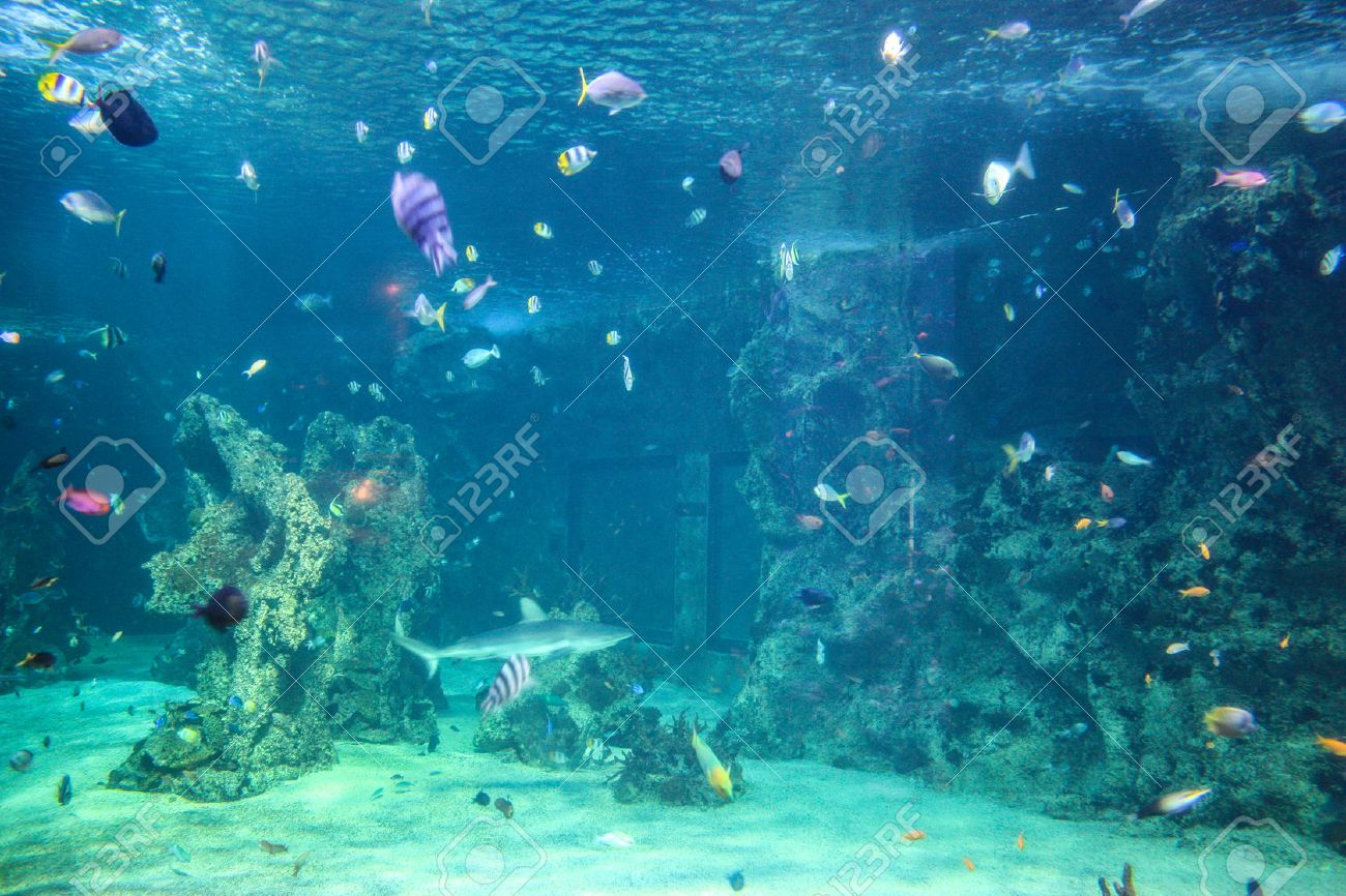 Under The Sea Aquarium | Australia Sydney Museum Aquatic Animals Aquarium Fish Azure Under