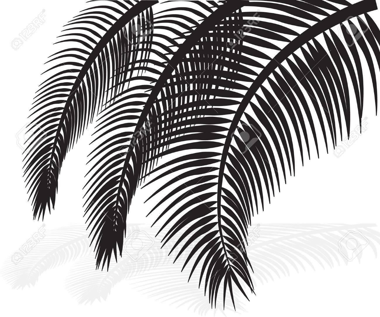 palm leaves on white background  Vector illustration Stock Vector - 21637822