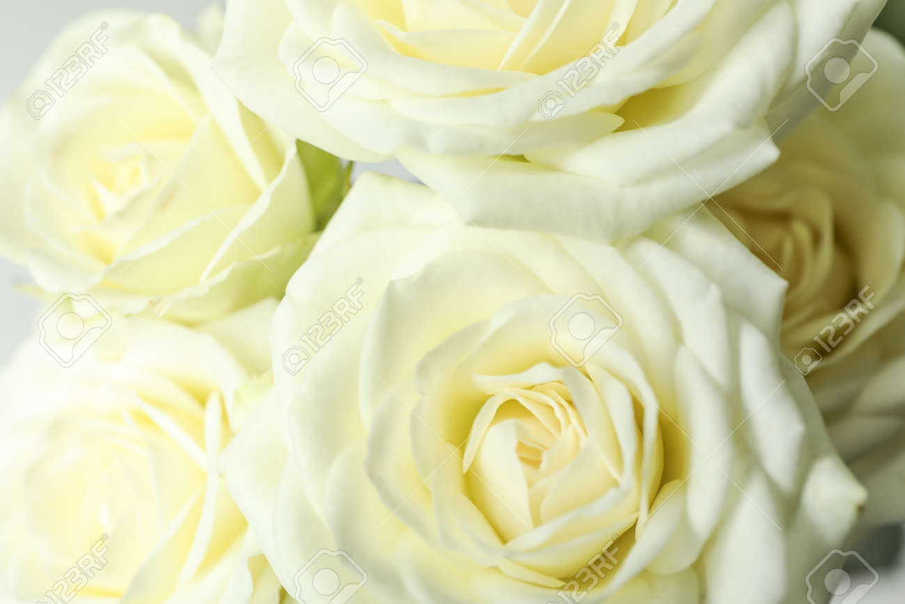 Beautiful fresh white roses as background, closeup - 121128479