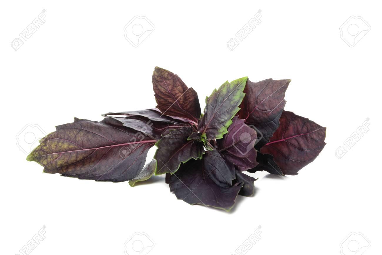Fresh purple basil isolated on white background - 154607354