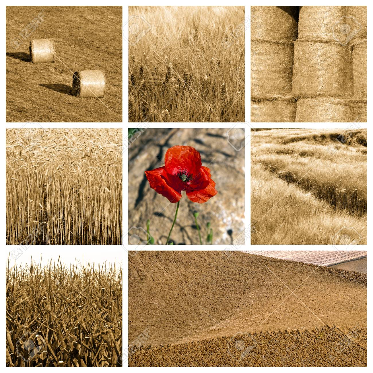 Collage of photos about wheat Stock Photo - 10281190