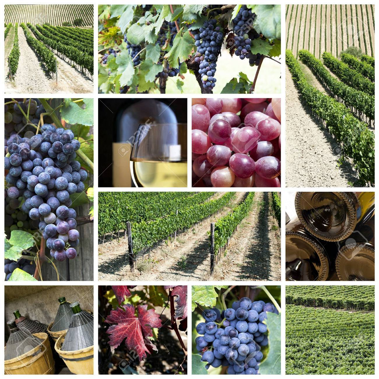 A collage about vineyard and wine theme Stock Photo - 15034723