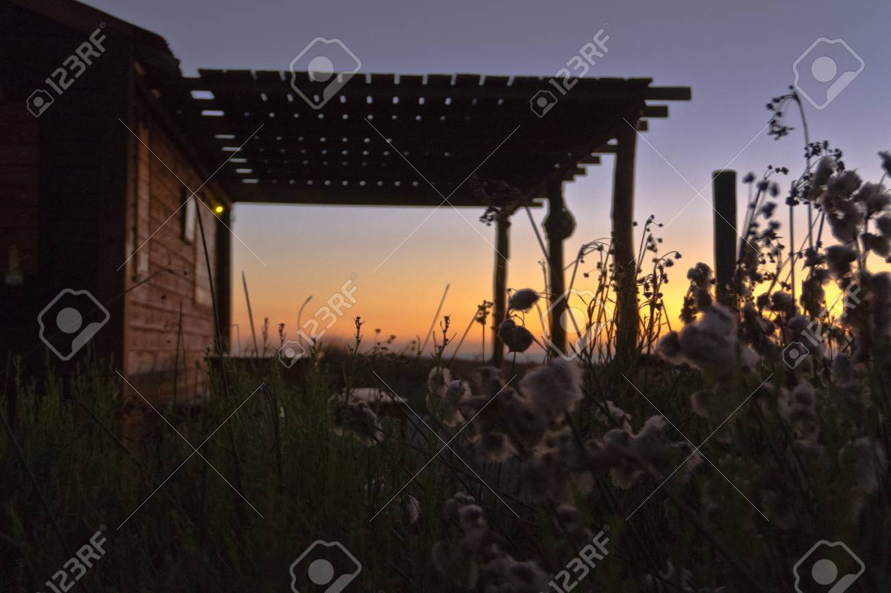 Ranch house at sunset with soft plants in front. on modular homes with, traditional homes with, spanish style homes with, country homes with, 2 story homes with, single story homes with, contemporary homes with,
