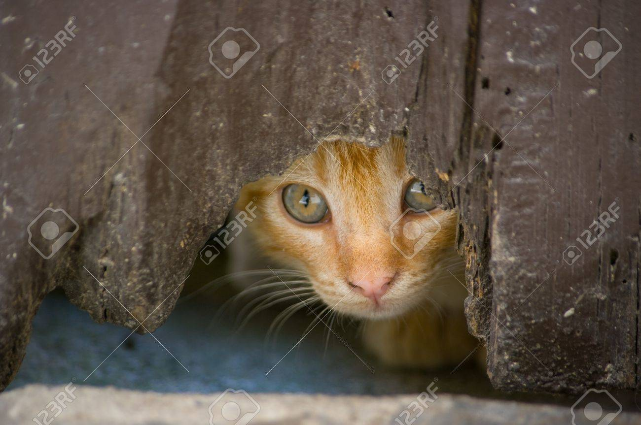 kitten hiding behind an old by Stock Photo - 10059042