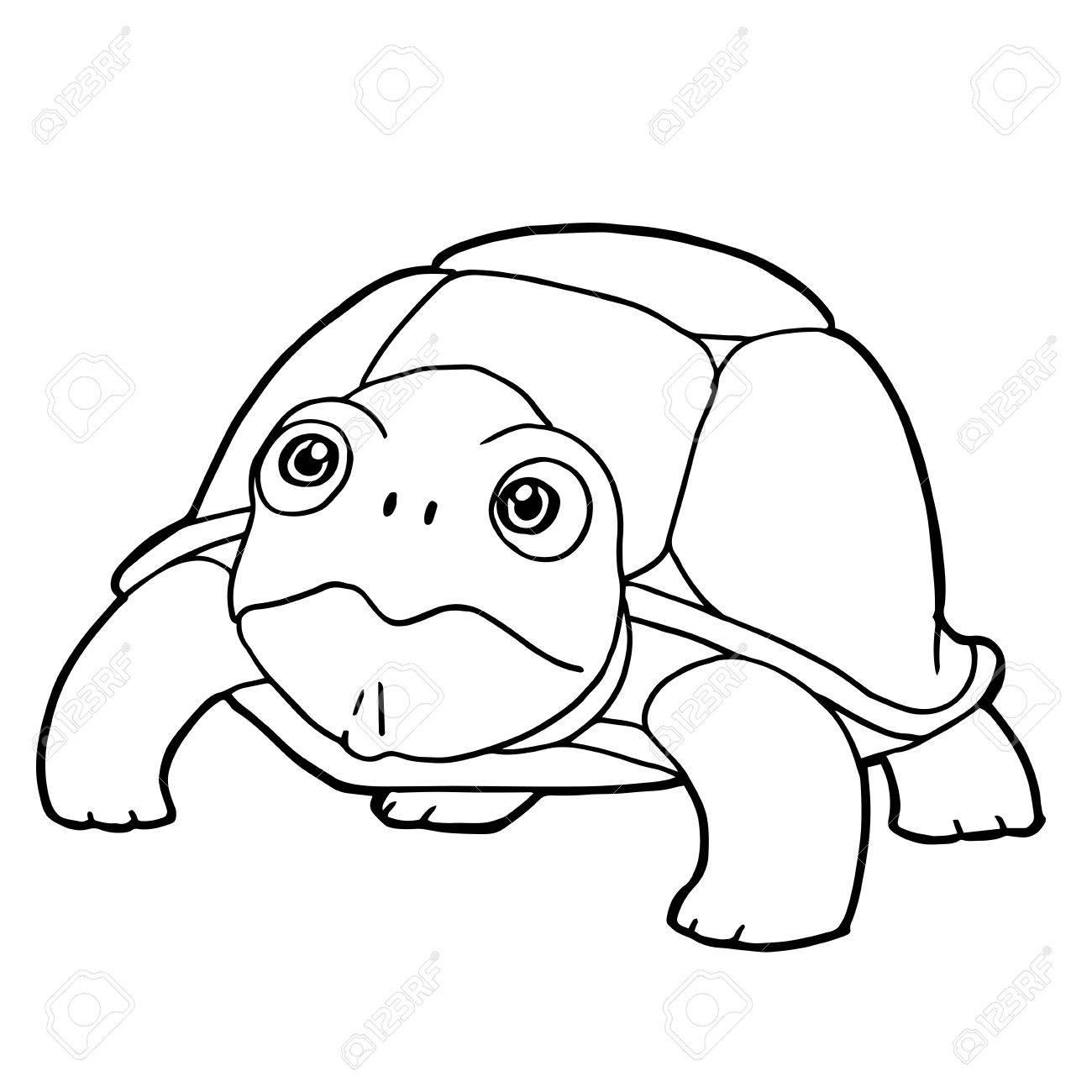 Dibujos Animados Linda Tortuga Para Colorear Página Ilustración ...