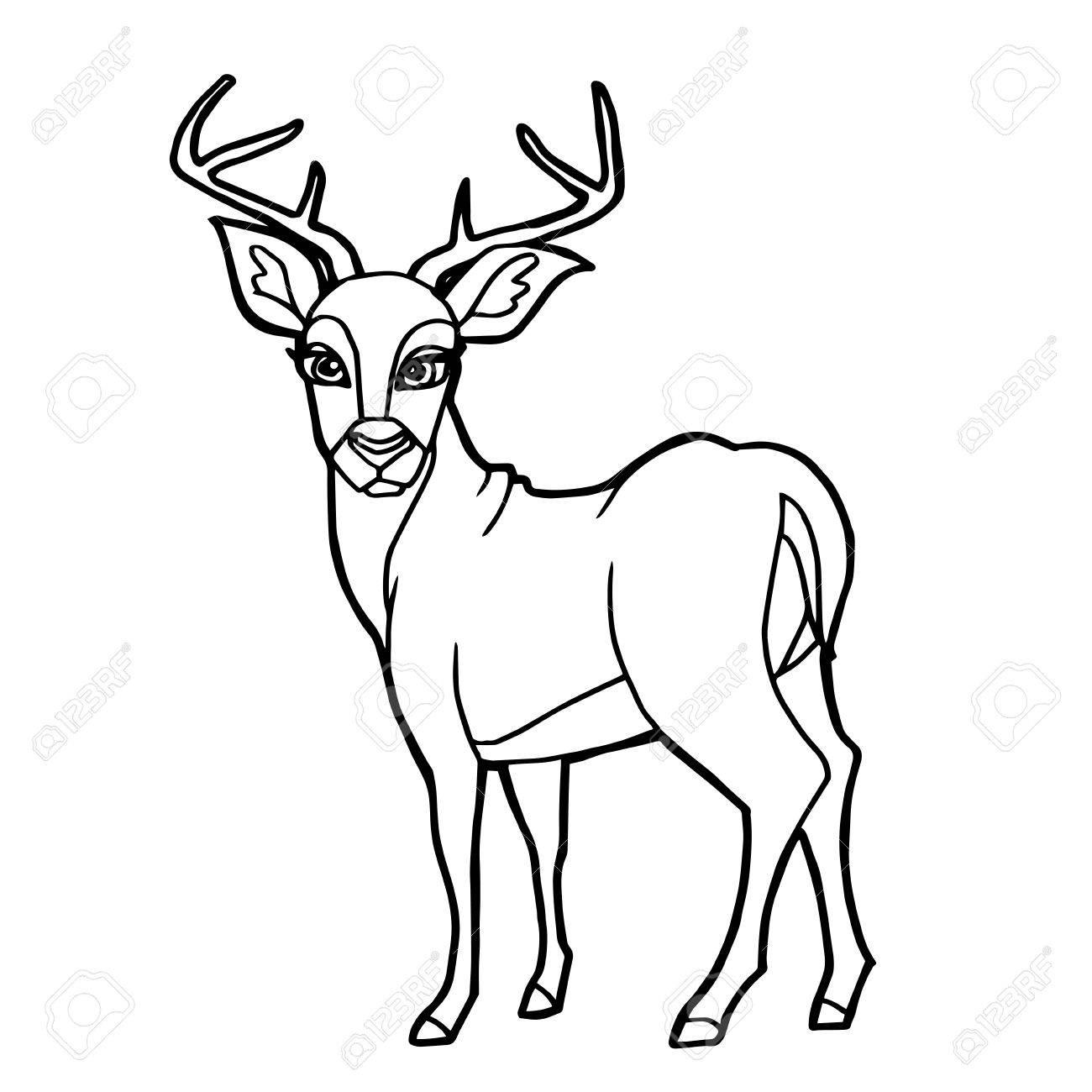 100+ deer color page | deer coloring pages baby deer coloringstar