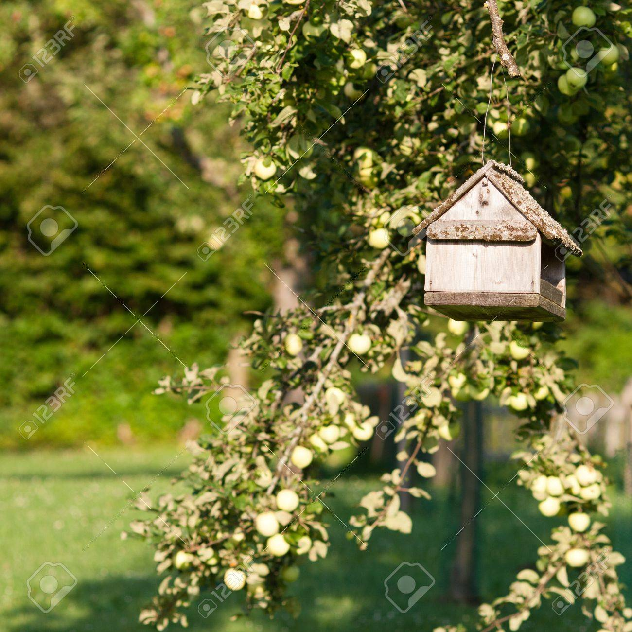 Bird table/feeder suspended from a tree in a country orchard lit by summer sunshine Stock Photo - 11801805