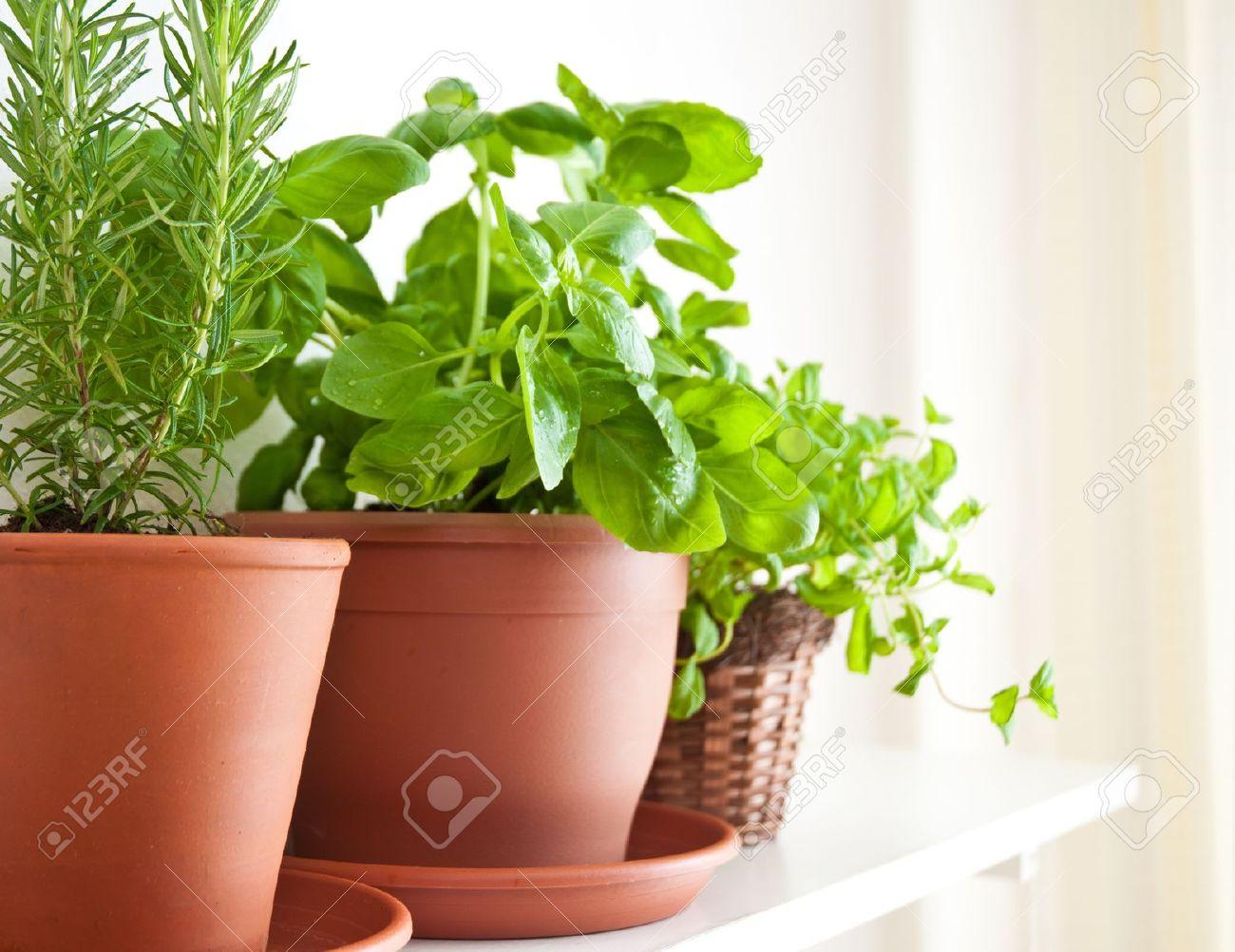 Three pots of herbs: Rosemary, Basil and Mint - 9289906