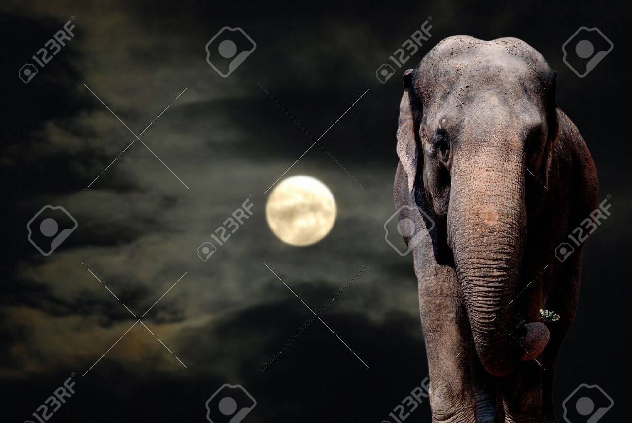 Elephant Walikng in the Night - Full Moon Stock Photo - 10037059