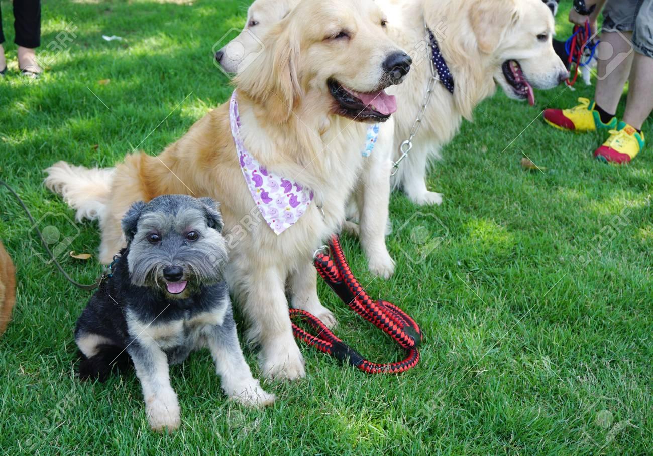 Pequeno Perro Negro Sonriente Y Sentado En Medio De Grandes Perros