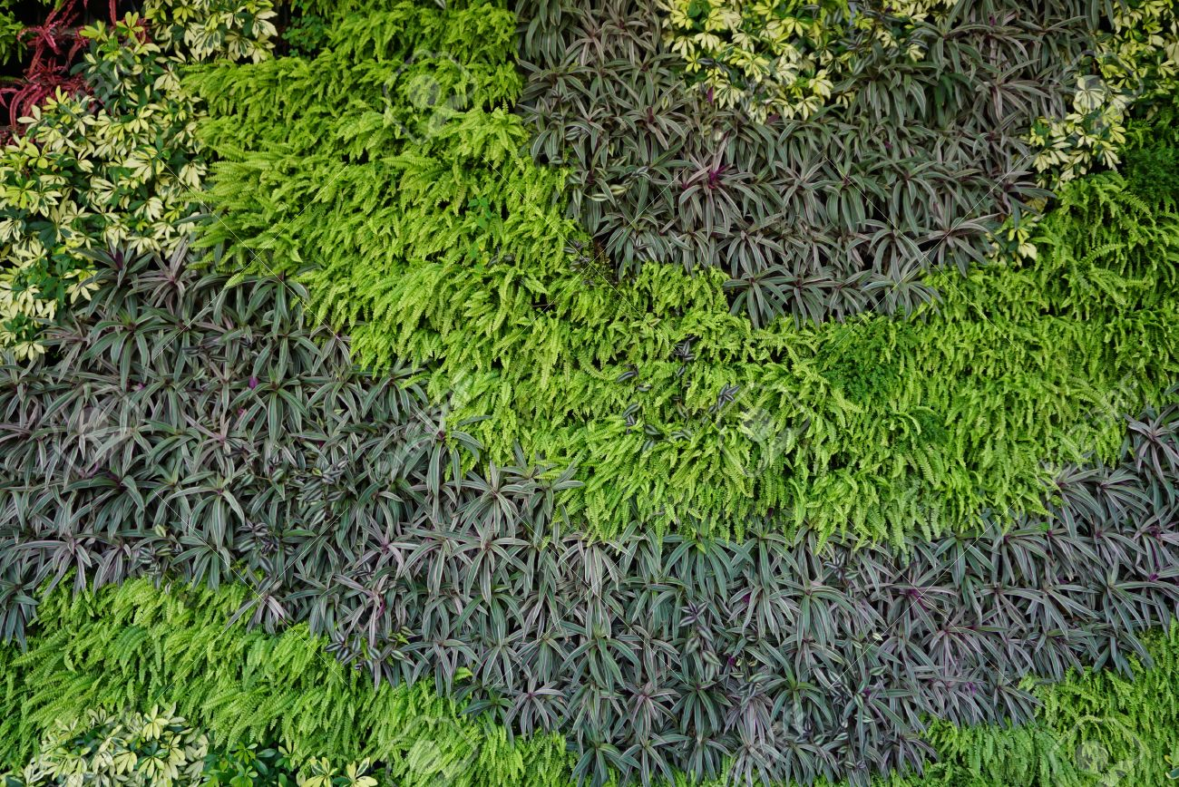Variety Of Plants In Vertical Garden Texture Wall