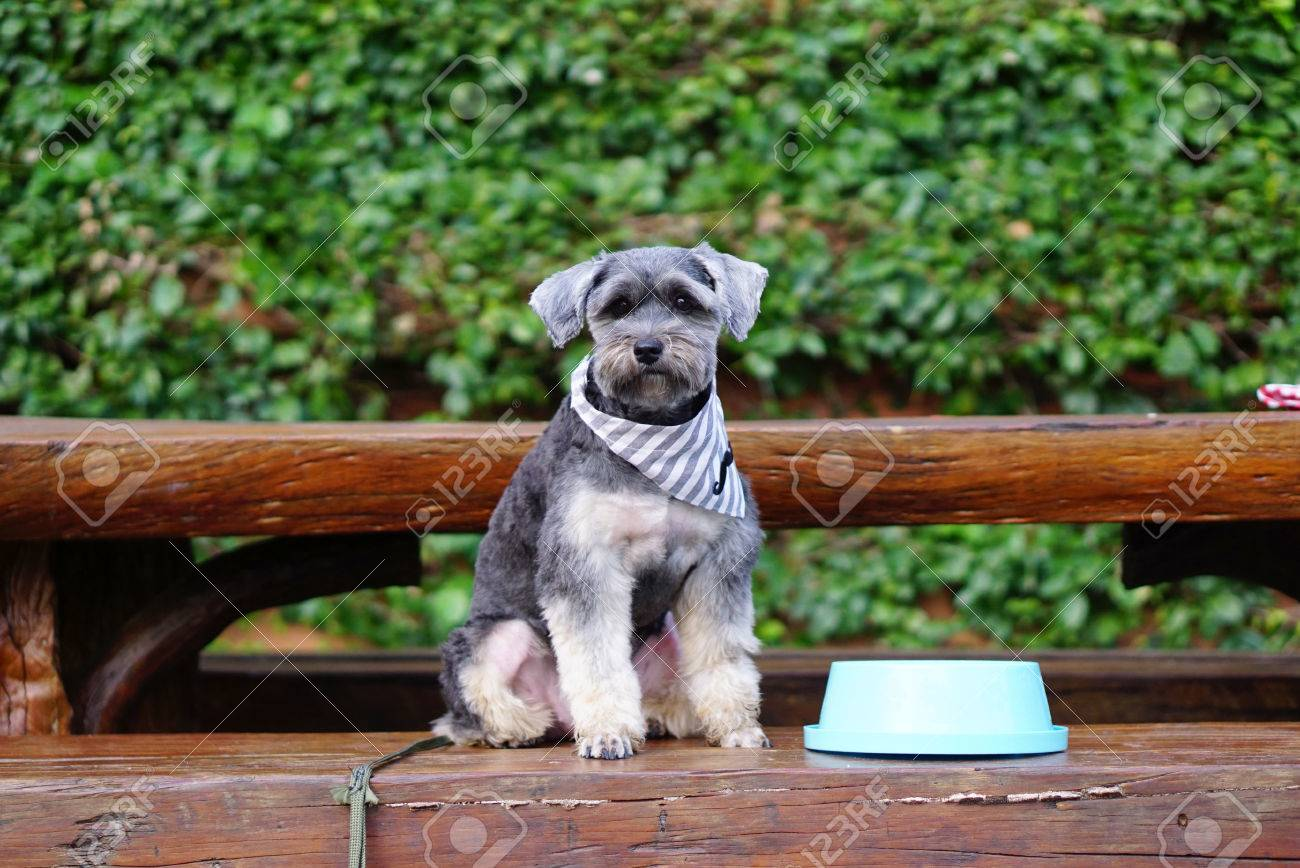 Image result for DOG SITTING NEAR WATER BOWL