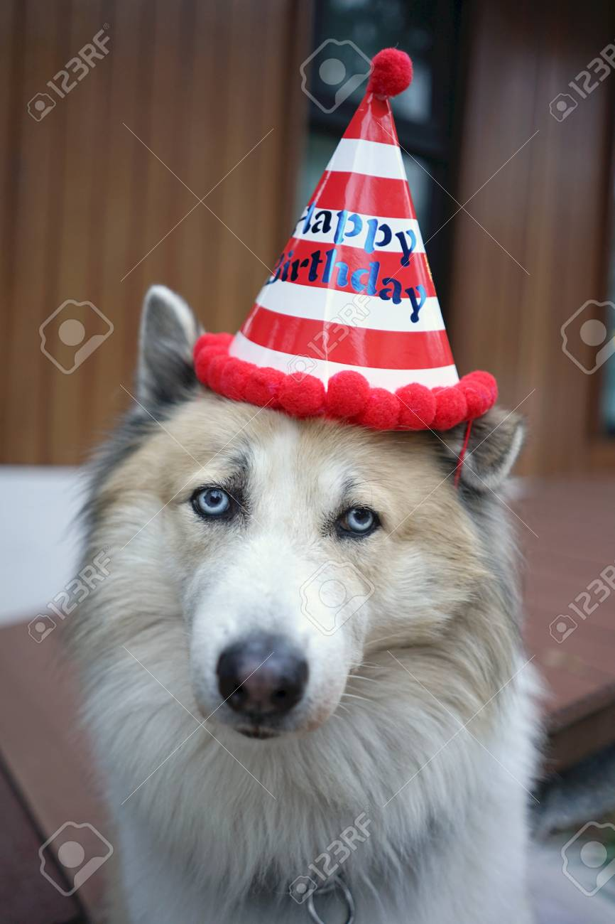 Beautiful Happy Dog Wearing Red And White Stripe Birthday Party Hat Standard Bild