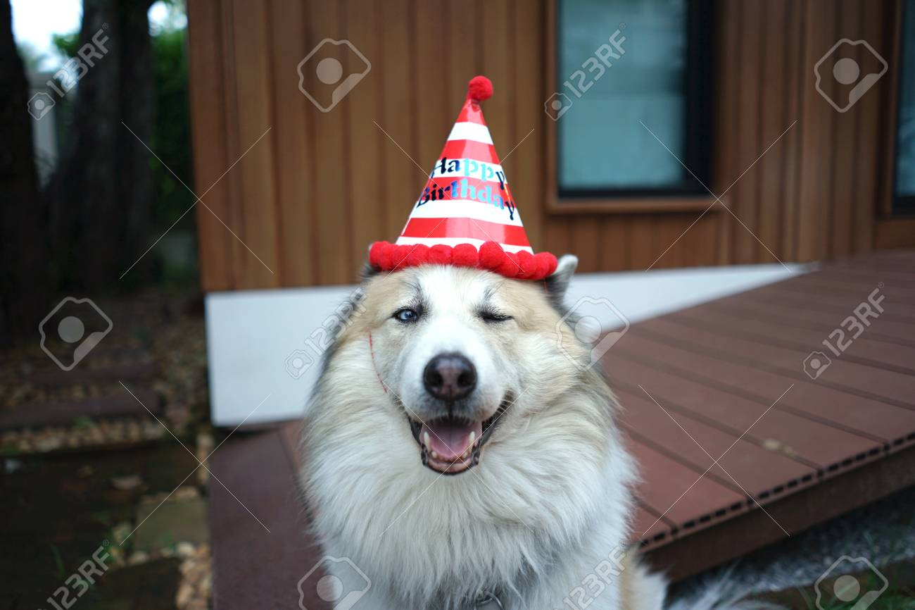 Beautiful Happy Dog Wearing Red And White Stripe Happy Birthday