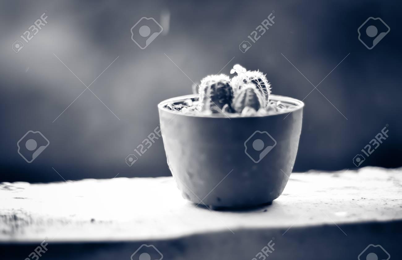 Tono Terraza : Tono del color de la vendimia de cactus colocado en la terraza con