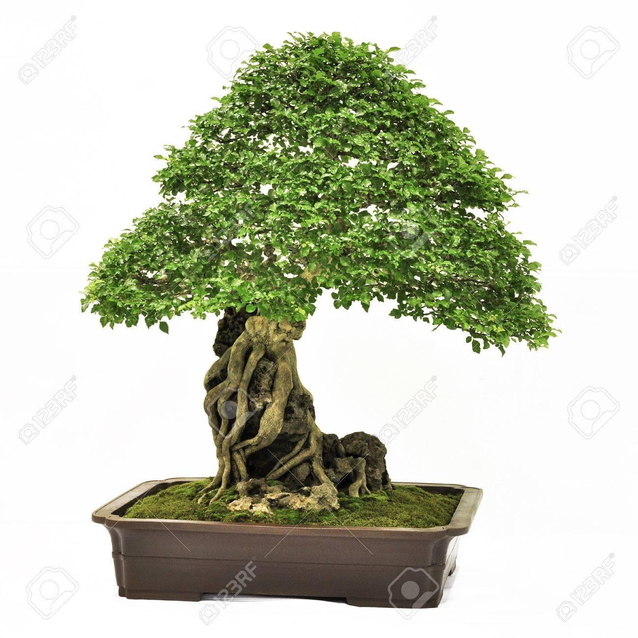 Arbre Persistant En Pot petit arbre free pdf | ibps clerk preparation books pdf free