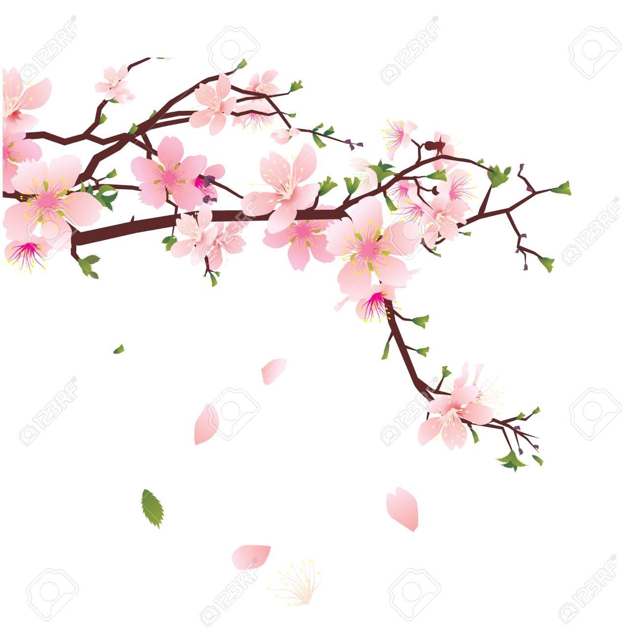 Japanese Flowers on white background.