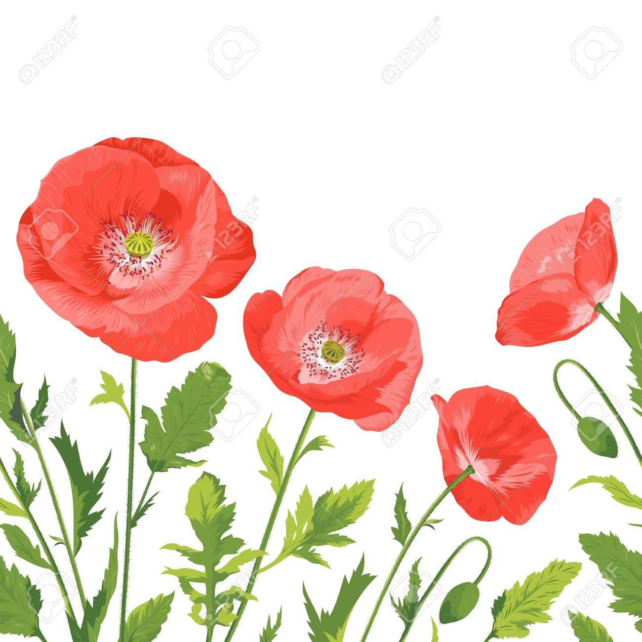 beautiful poppies bouquet Stock Vector - 16980928
