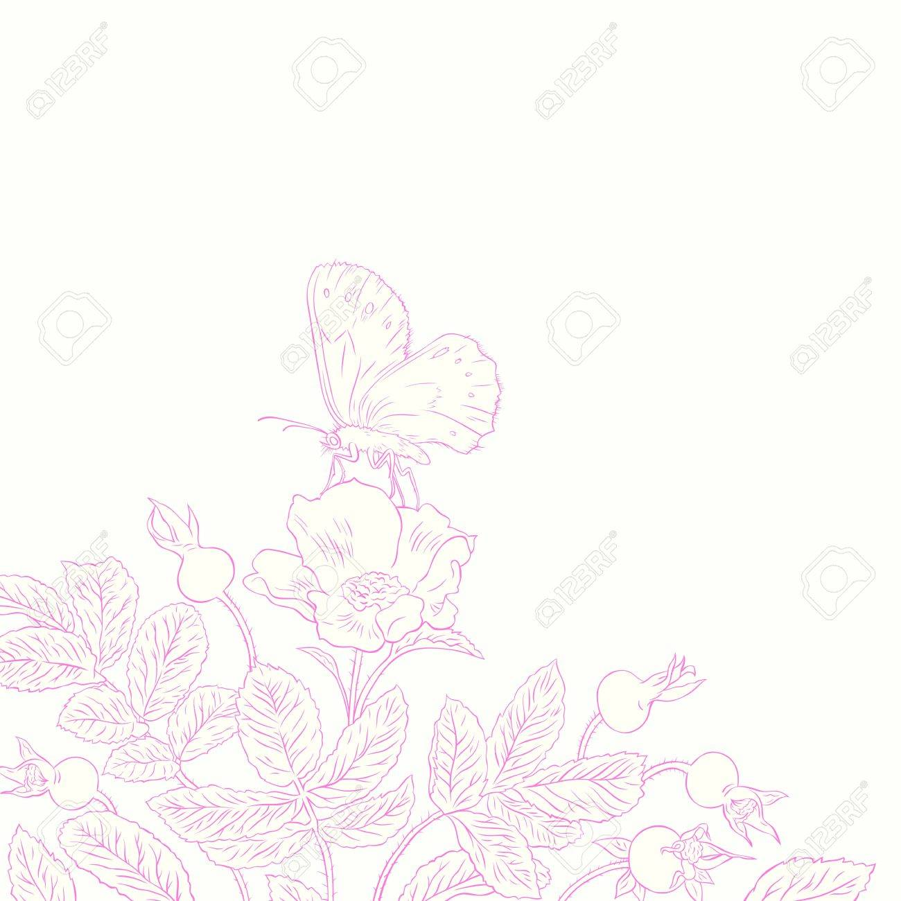 contour drawing beautiful rosehip and butterfly Stock Vector - 16980918