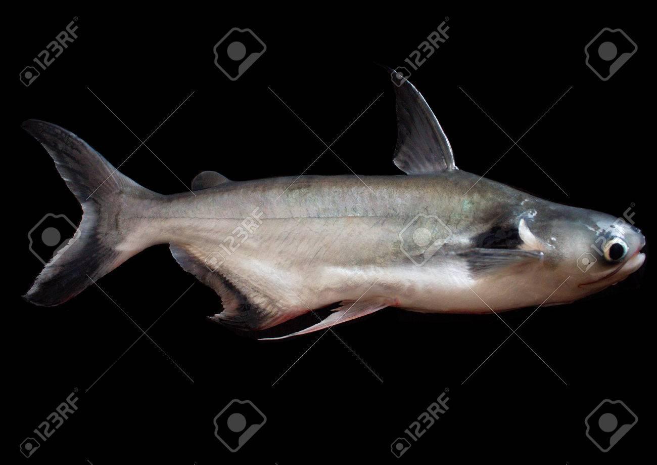 Vor Einer Fischgräte Lizenzfreie Fotos, Bilder Und Stock Fotografie ...
