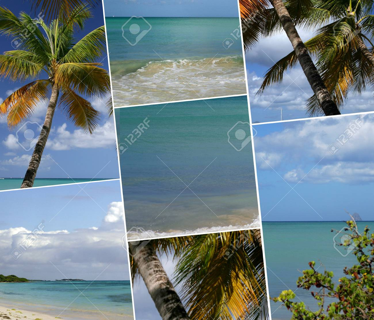 Tropical palm trees Stock Photo - 12219788