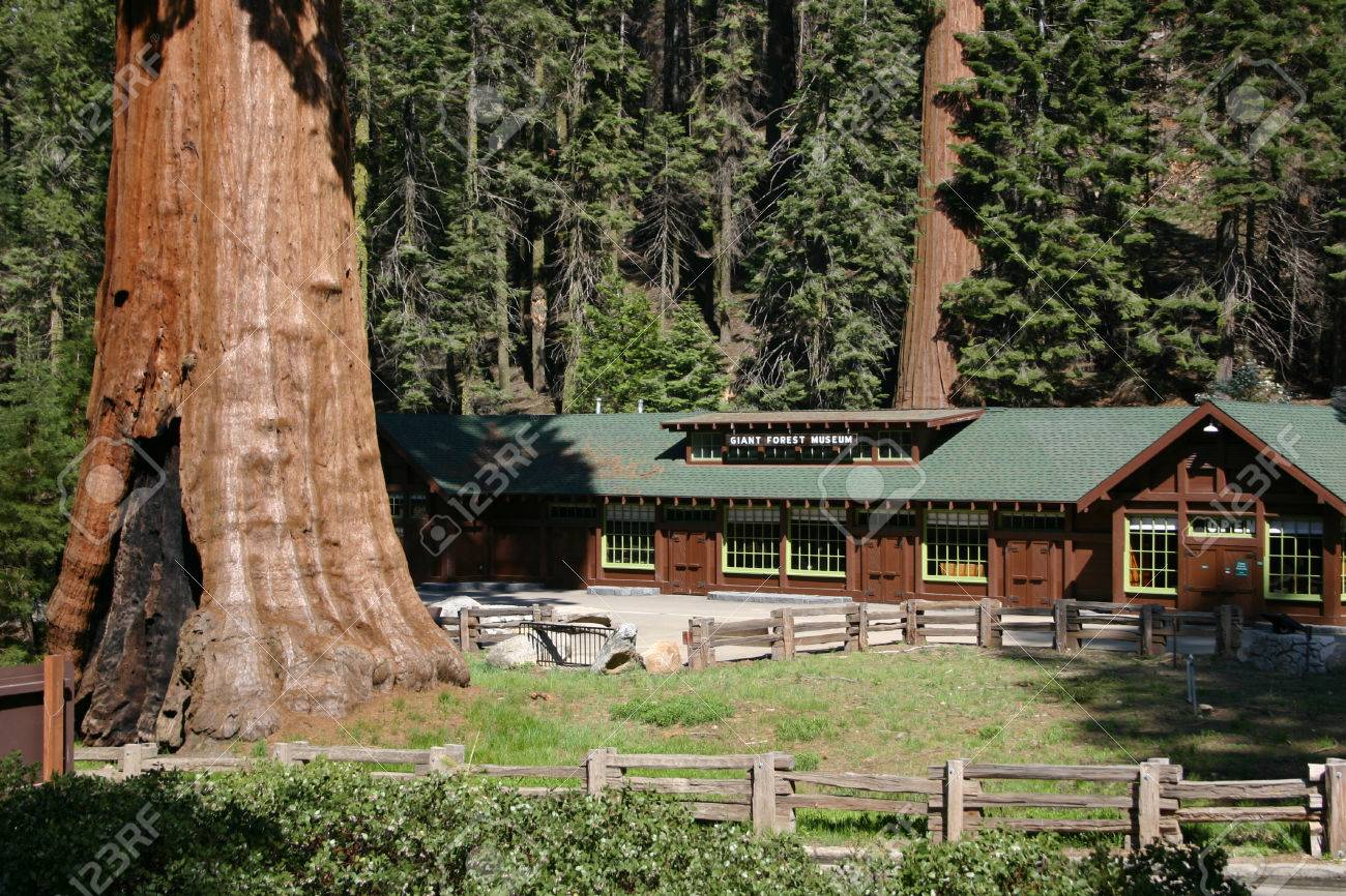 national canyon guide kings essay a sequoia in photo cabins park