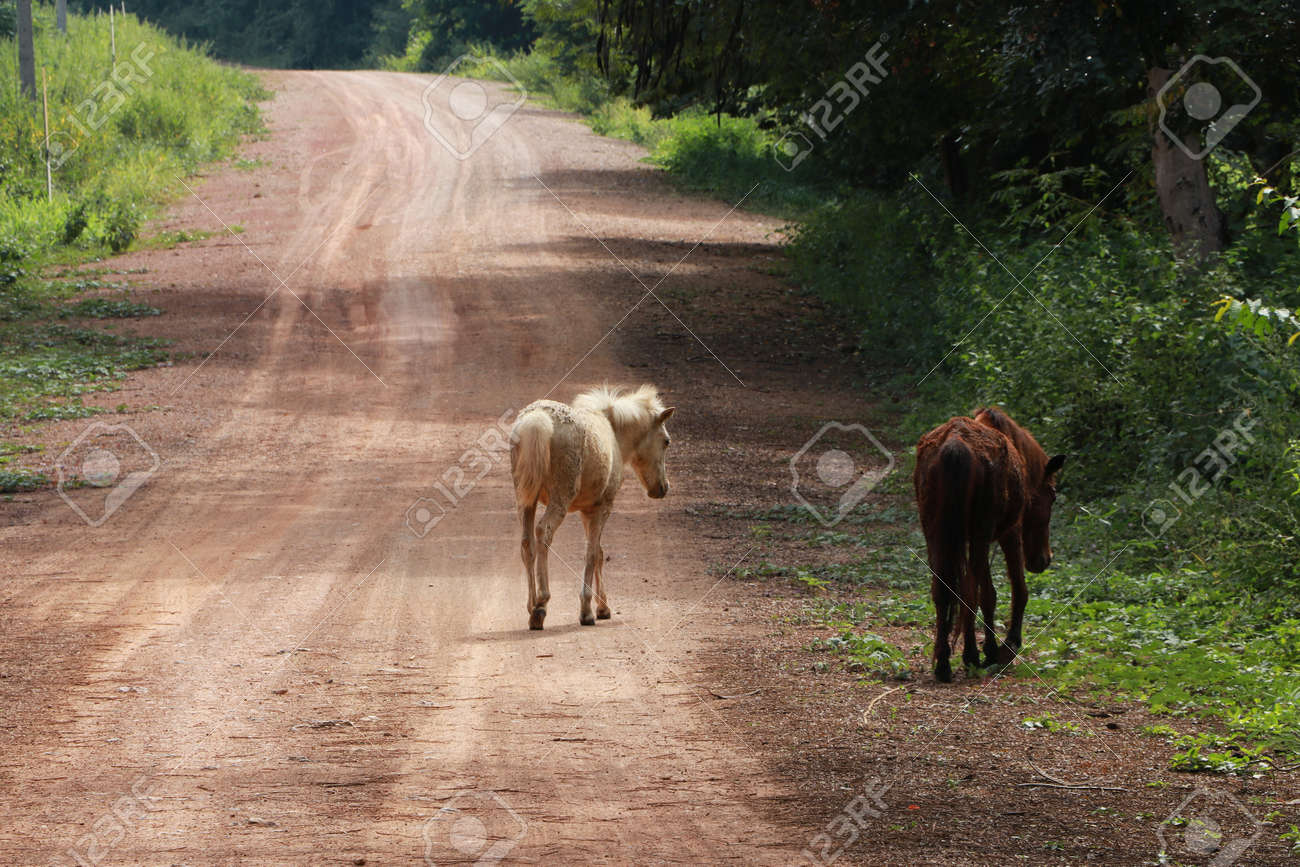 Two horses walking on the dirt road. it is a mammal with a flowing mane and tail, used for riding, racing, and to carry and pull loads. - 162680070