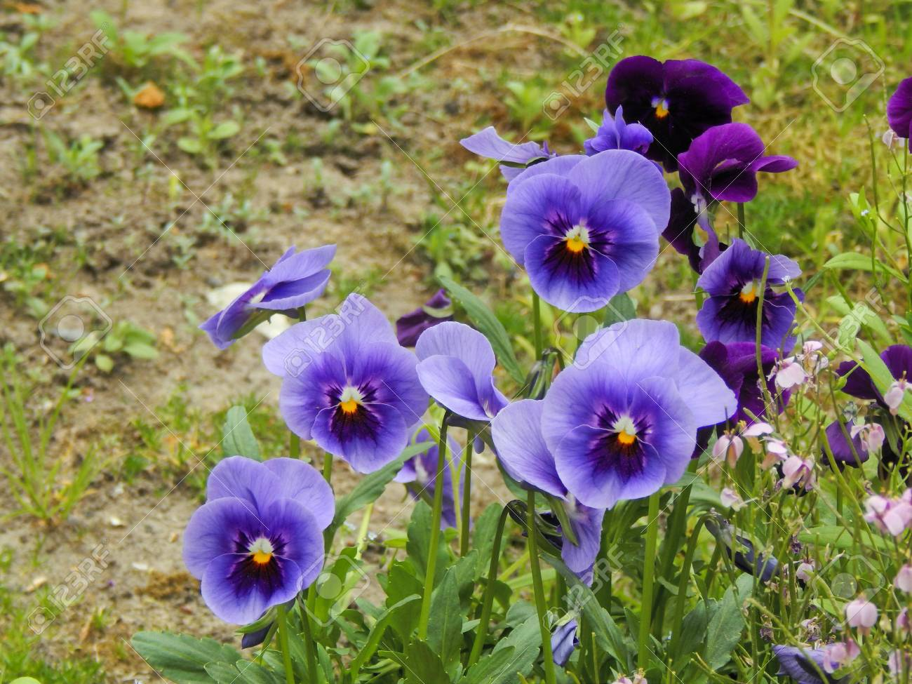Fiori da bordura piante perenni fiori da bordura giardino